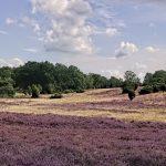 Reisen im Rollstuhl: Lüneburger Heide – Tal der Haverbeeke